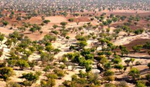arganbomen die in Marokko groeien