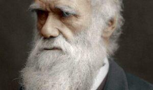 darwins baard